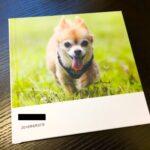 愛犬の写真集