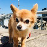 中島の休日(愛犬と隅田川散歩)