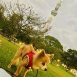 愛犬と東京ミズマチへ